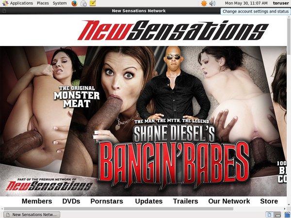 Shanedieselsbanginbabes.com Logins Free